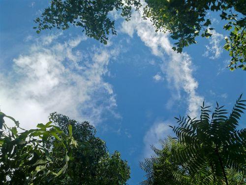 sky cloud treetops