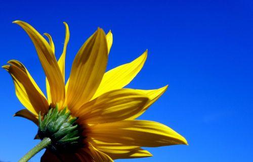 sky yellow flower