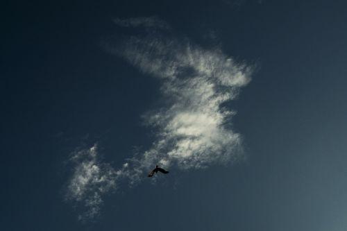 dangus,mėlynas,debesys,debesis,dramos,mėlynas dangus,dangus,šviesa,paukštis,paukščiai,sparnai,varna,kailash,menas,nuotraukos,Fotografas
