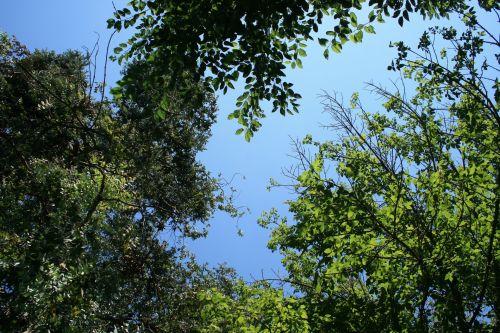 Sky Above Tree Tops