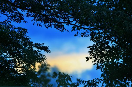 Sky Through An Opening
