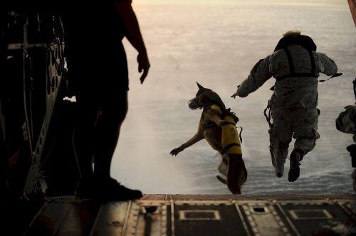skydiving jump dog