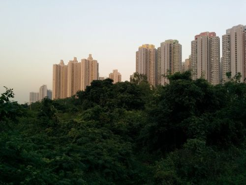 skyscrapers rainforest hong-kong
