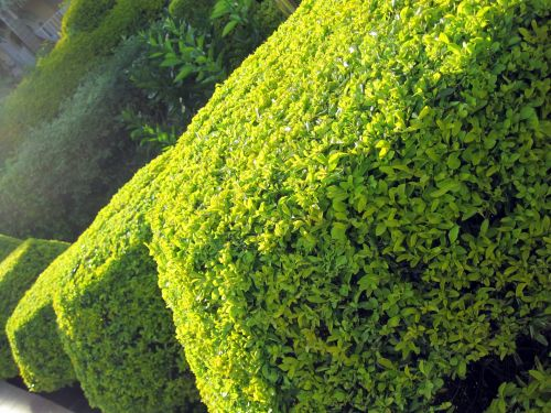 Slanted Shaped Hedge