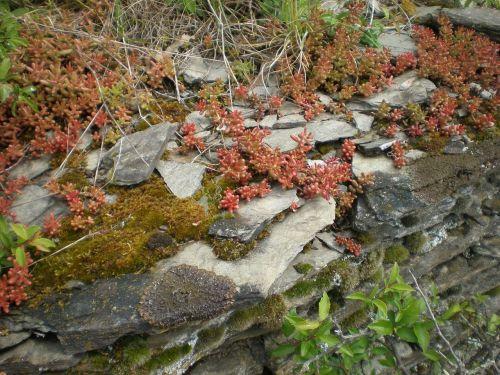 slate layer rock