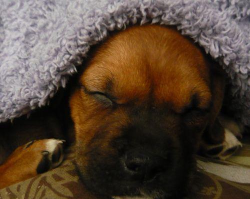 Sleep Humphrey