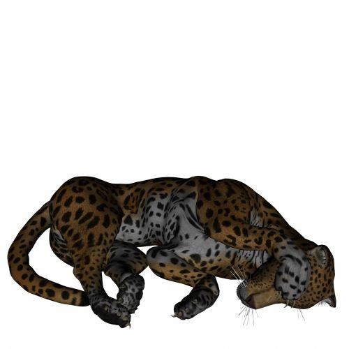 Sleeping Panthera