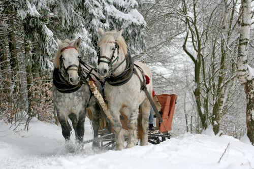sleigh ride horses the horse