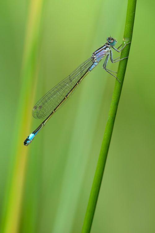 slender dragonfly dragonfly bad luck dragonfly
