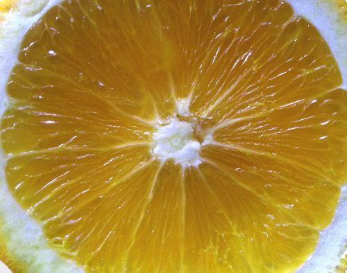 Slice Of Citrus