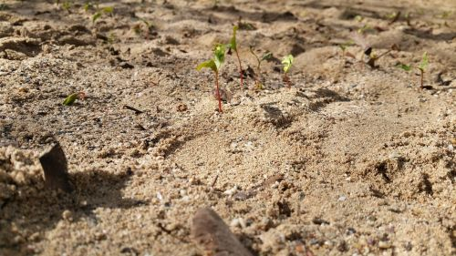 slip plant grow