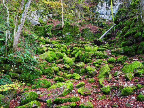 nuolydis, Waldhang, akmenys, bemoost, elsachbröller, urvas