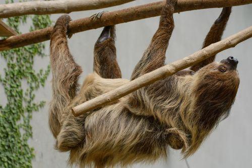 sloth zoo depend