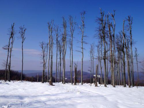slovakia winter little carpathians