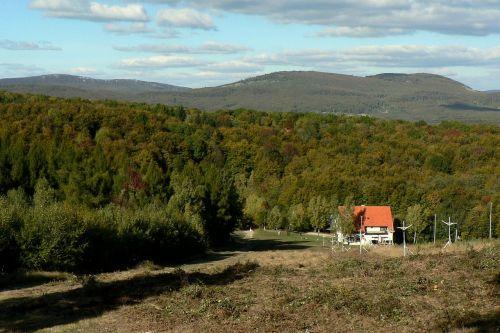 slovakia little carpathians forest