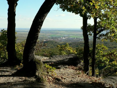 slovakia little carpathians trees