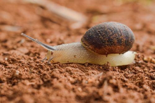 slow snail slimy