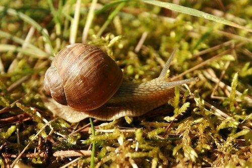 slow  slippery  snail