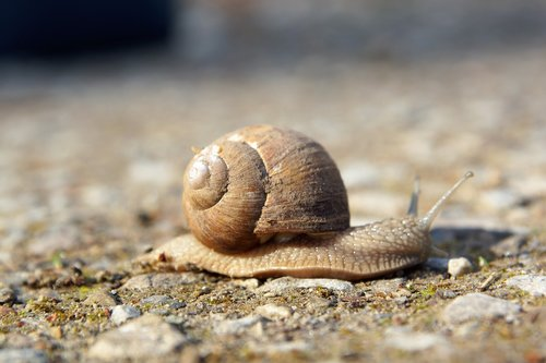 slowly  snail  nature
