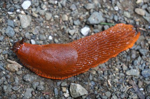 slug snail crawl
