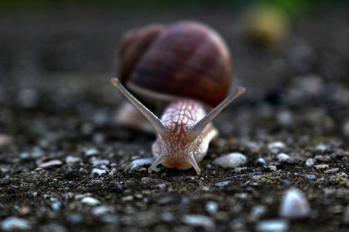 slug snail conch