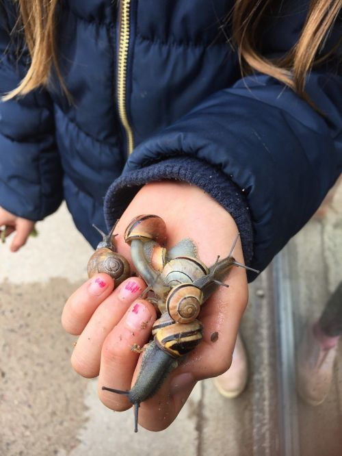 slug snails children