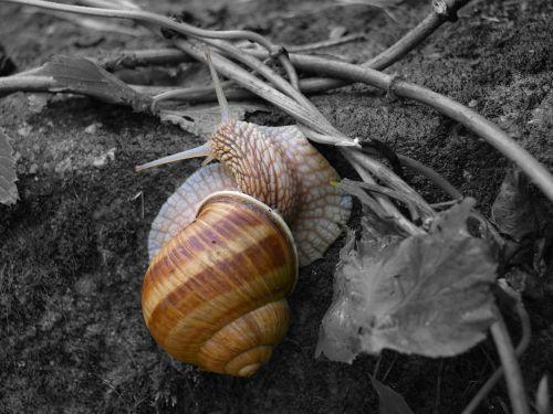 slug nature animal