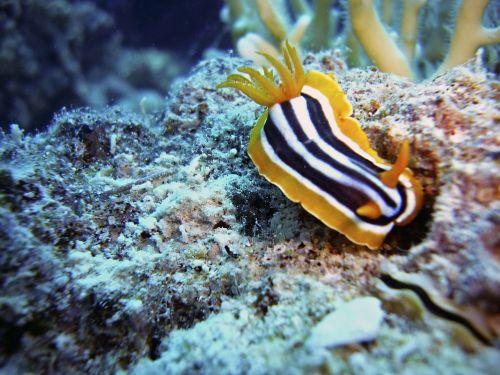 slug snail diving