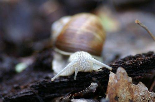 slug  seashell  mark