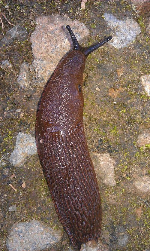 slug reptile slowly