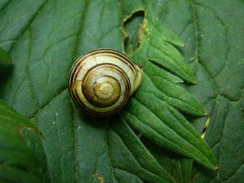 slug animals sea shells