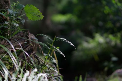 small aperture blur soft bokeh