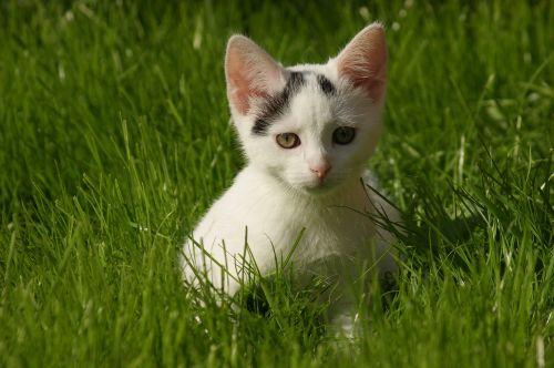 small cat cat domestic cat