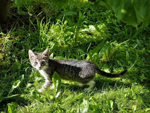 small cat grass kitten