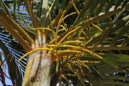 small coconuts nature twigs
