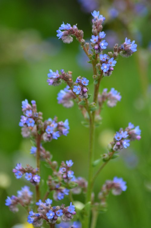 small flowers  purple  blue