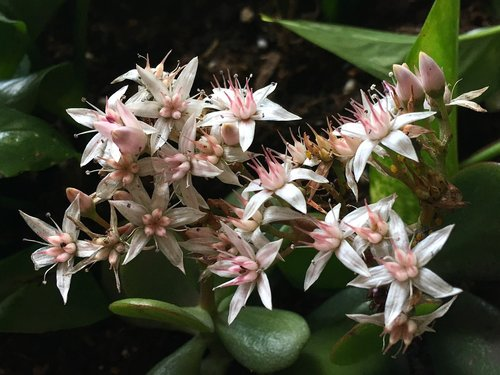 small flowers  pistils  flower