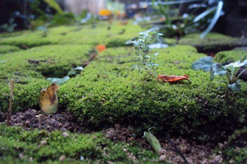 žalias, augalai, žalia & nbsp, augalai, mažos & nbsp, augalai, mažos & nbsp, augalai, šlapias grindis, maži žali augalai