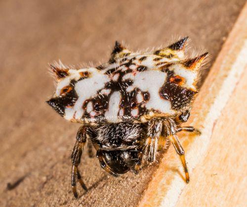 small spider arachnid close