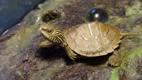 small turtle turtle with food reptile