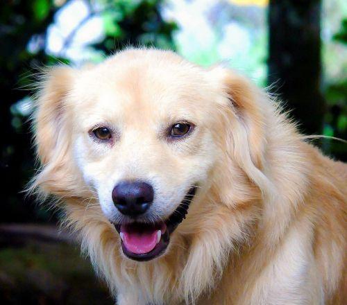 smiling dog portrait cute