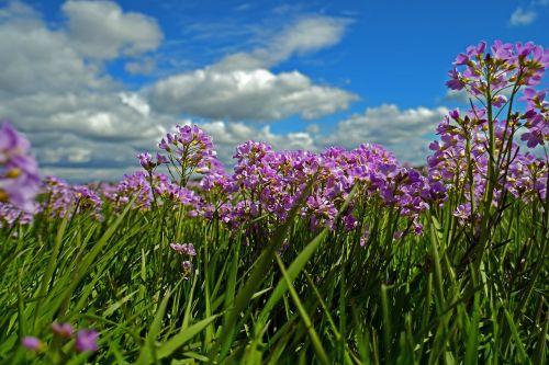 smock meadow grassland