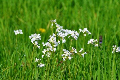 smock  card amines  medicinal herbs