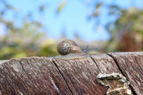 snail macro molluscs
