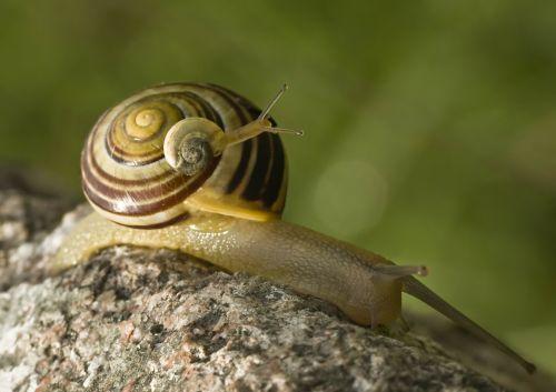 snail snails tandem