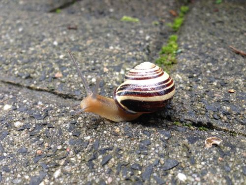 snail paving stone animal