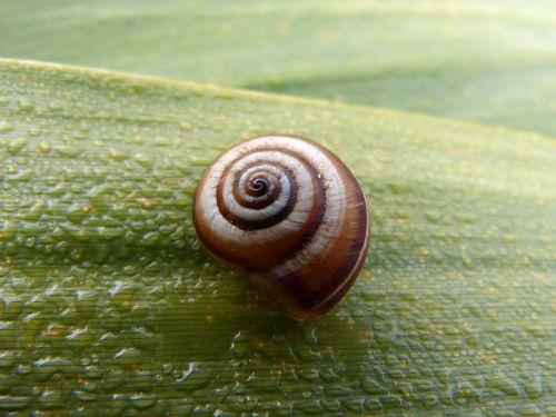 snail leaf moisture