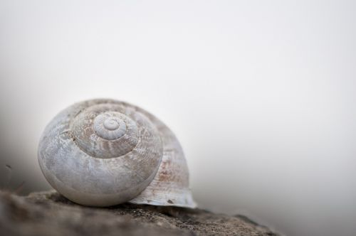 snail white shell