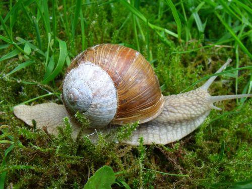 snail shell mollusk