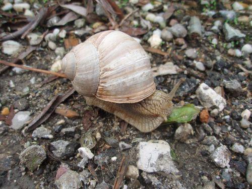 snail crawl schnecknehaus